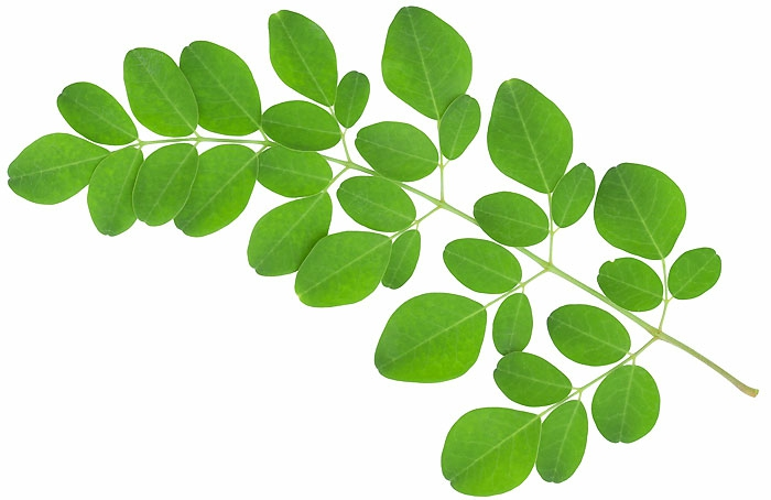 picture of Moringa