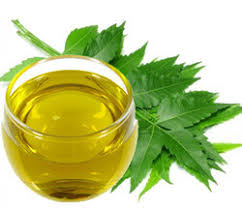 picture of Neem